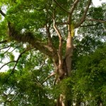 The Roles Played by Trees in Improving Your Health